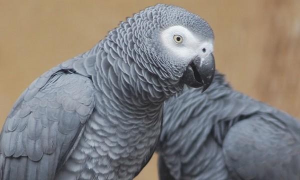 assurance santé perroquet